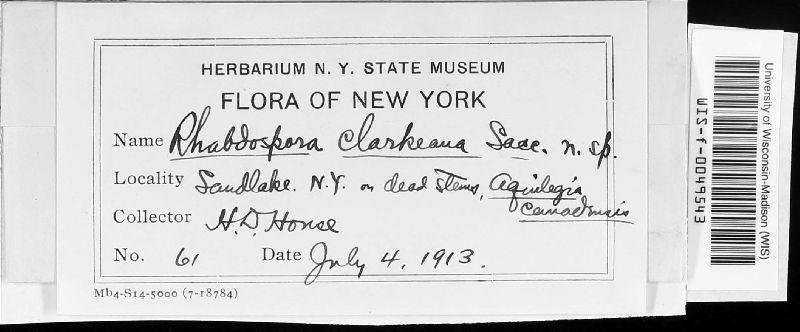 Rhabdospora clarkeana image