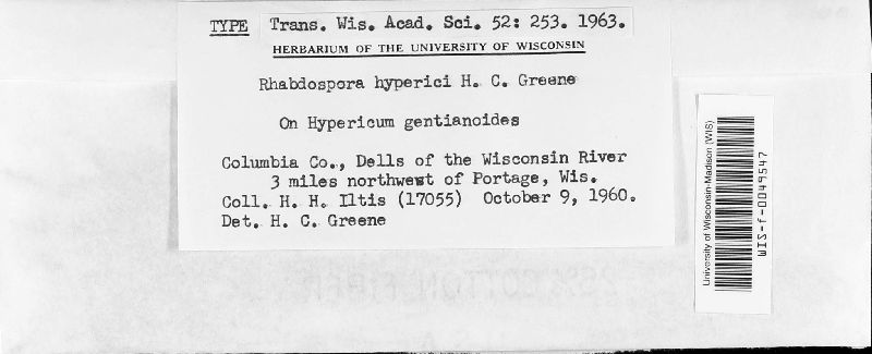 Rhabdospora hyperici image