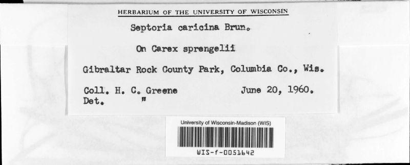 Septoria caricina image
