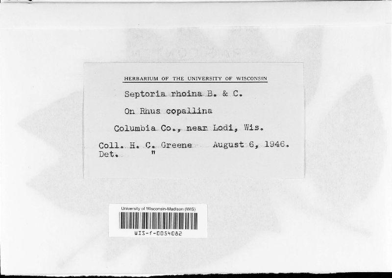 Septoria rhoina image