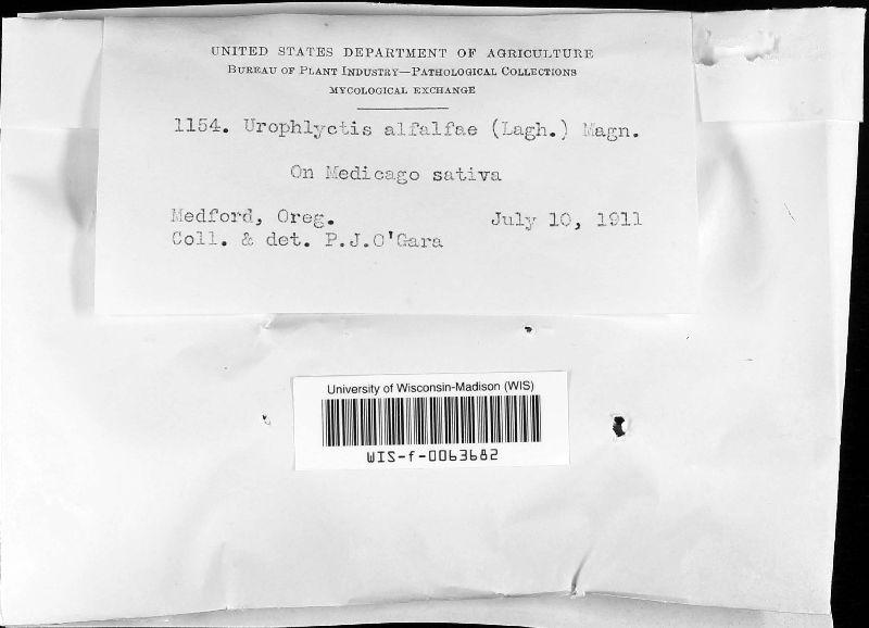 Physoderma alfalfae image