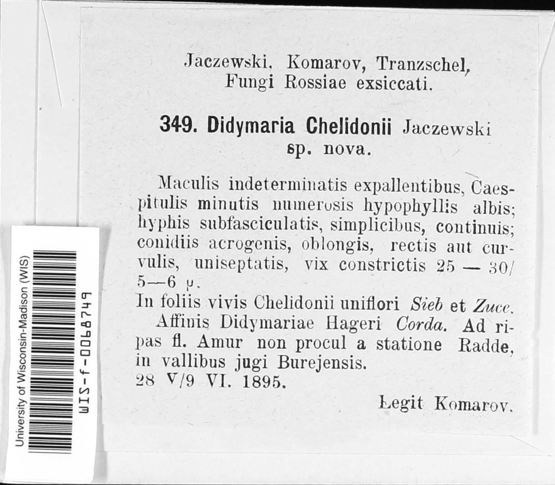 Didymaria chelidonii image