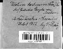 Hymenoscyphus herbarum image