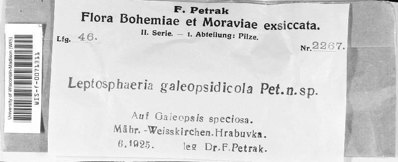 Leptosphaeria galeopsidicola image
