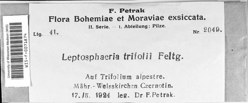 Leptosphaeria trifolii image