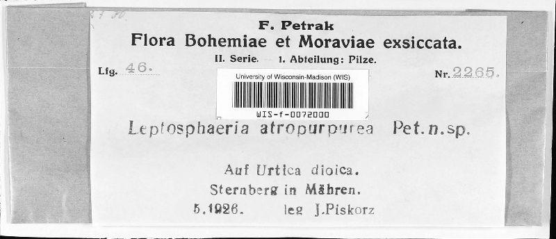 Leptosphaeria atropurpurea image